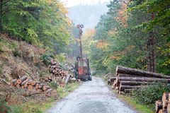 Spruce Timber Logging in the forest Stock Photography