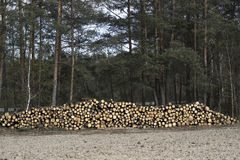 Spruce Timber Logging in the Forest. Folded forest Stock Photo