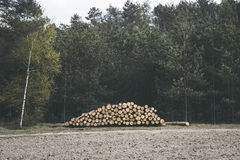 Spruce Timber Logging in the Forest. Folded forest Royalty Free Stock Image