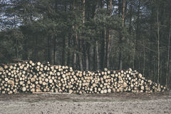 Spruce Timber Logging in the Forest. Folded forest Stock Photos