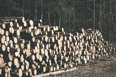 Spruce Timber Logging in the Forest. Folded forest Royalty Free Stock Images