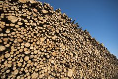Spruce timber logs Royalty Free Stock Photo