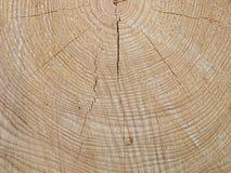Spruce trä med tree-cirklar arkivbilder