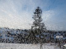 Spruce tree behind iced window stock photography