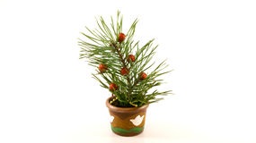 Spruce tree branch with Christmas balls in tiny, ceramic pot. Isolated on white background Royalty Free Stock Photos