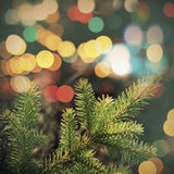 Spruce tree branch closeup photo with colorful lights bokeh Stock Photo