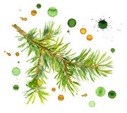 Spruce tree branch with ink spraying paint drops. Watercolor painted pine branch one isolated, handmade Stock Photo