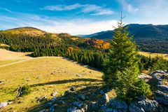 Spruce tree on a cliff. Beautiful sunrise in mountains. lovely autumn weather Stock Photos