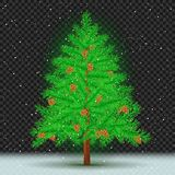 Spruce tree dark transparent background. Spruce with cones on transparent dark background. Christmas fir tree and pine cone in branches. Green needles plant with Royalty Free Stock Images