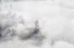 Spruce tree in dense fog Royalty Free Stock Images