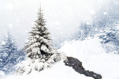 Spruce Tree foggy Forest Covered by Snow in Winter Landscape. stock image
