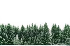 Spruce tree forest covered by fresh snow during Winter Christmas time background border frame. stock photo