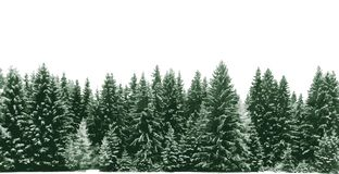 Spruce tree forest covered by fresh snow during Winter Christmas time. Forest of green Christmas trees background vector. vector illustration
