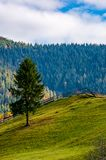 Spruce tree on grassy hillside in autumn Stock Photography
