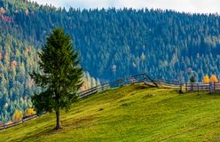 Spruce tree on grassy hillside in autumn Stock Photos
