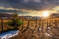 Spruce tree on a hillside in springtime at sunset stock image