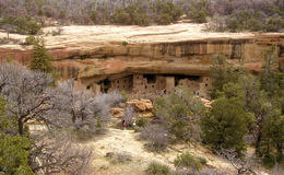 Spruce Tree House at Mesa Verde. The Spruce Tree House ruins at Mesa Verde National park in Colorado. These Anasazi cliff dwellings are over 700 years old Stock Photos