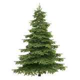 Spruce Tree Isolated. On white Royalty Free Stock Images