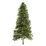Spruce Tree Isolated. On white Stock Photo