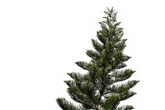 Spruce tree isolated on white Stock Images