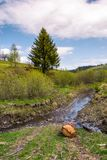 Spruce tree and log near the brook. Nature scenery with grassy hills in springtime under the cloudy sky Stock Photography