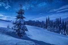 Spruce tree on a mountain hill covered with snow royalty free stock images