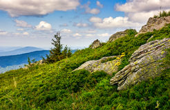 Spruce tree on a mountain hill side. Lonely spruce tree among big rocks on grassy slope. nice vewpoint with hill and peak in the distance. lovely mountain Stock Images