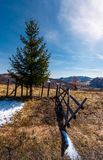 Spruce tree near the fence in mountains. Beautiful springtime scenery with melting snow on weathered grass Stock Images