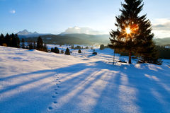 Spruce tree shadow at sunset in Alps Stock Image