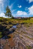 Spruce tree and small brook in mountains royalty free stock photo