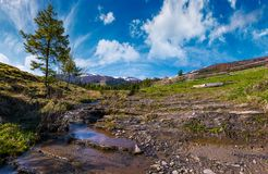 Spruce tree and small brook in mountains. Lovely springtime scenery in valley of Pylypets village. coniferous forest at the foot of Borzhava mountain ridge Royalty Free Stock Photos