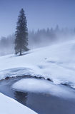 Spruce tree on snow by frozen lake in winter Stock Image