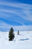 Spruce tree on snow meadow over blue sky Stock Photo