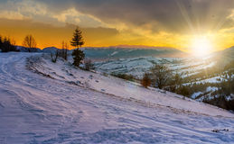 Spruce tree on snowy meadow in mountains at sunset. Spruce tree on a rural meadow full of snow in high mountains in evening light Royalty Free Stock Images