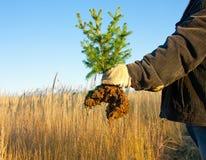 spruce treebarn för hand Royaltyfri Fotografi