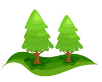 Spruce trees Stock Photo