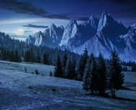 Spruce trees on hillside in mountains at night. Spruce trees on grassy hillside in mountains with rocky peaks at night in full moon light. beautiful composite Royalty Free Stock Images
