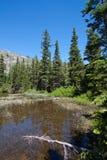 Spruce trees near the lake Royalty Free Stock Photo