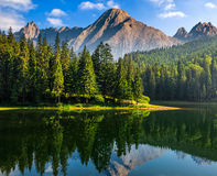 Spruce trees near the lake in mountains Royalty Free Stock Photo