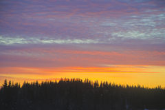 Spruce Trees Outline the Sun Rise Royalty Free Stock Photography