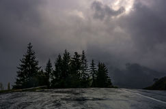 Spruce trees by the road in high mountains. Dramatic scenery with dark heavy clouds on the background Stock Photography