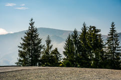 Spruce trees by the road in high mountains Royalty Free Stock Images
