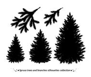 Spruce trees silhouettes Royalty Free Stock Photos