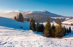 Spruce trees on snowy hillside. Beautiful frosty day. borzhva mountain ridge in the distance. lovely Carpathian scenery stock images