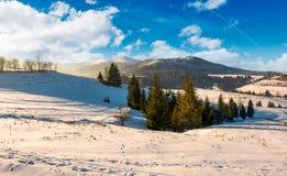 Spruce trees on snowy hillsides at sunrise Stock Photos