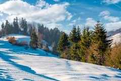 Spruce trees on a snowy mountain slope. Beautiful winter scenery on a bright sunny day Royalty Free Stock Images