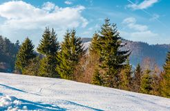 Spruce trees on a snowy mountain slope. Beautiful winter scenery on a bright sunny day Stock Photos