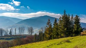 Spruce trees at Volovets serpentine in Carpathians. Gorgeous late autumn landscape with Temnatyk mountain in the distance. Beautiful nature of Carpathian Stock Photography