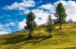 Spruce trees and wooden fence on grassy hillside. Lovely rural scenery in fine autumnal weather with cloudy sky Stock Image