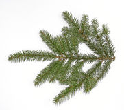 Spruce Twig Royalty Free Stock Photo